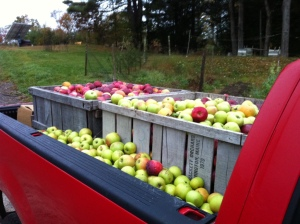 truckload of apples